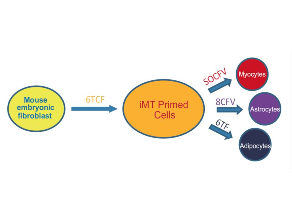郭国骥教授课题组在 Cell Research 上发表论文